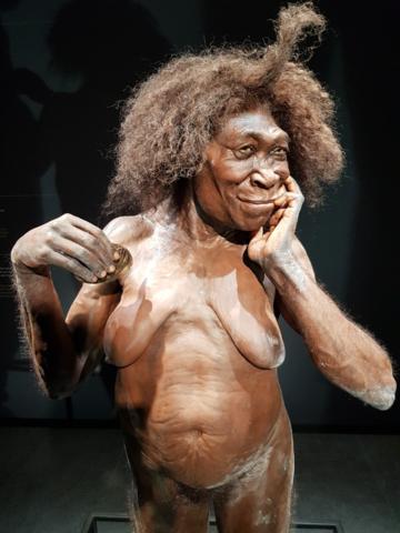 Naturalis-oermama-Homo-erectus